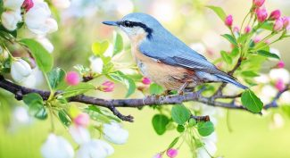 Small-bird-on-tree-branch-with-Spring-blossom